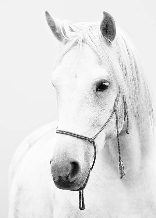 - Beautiful black and white animal poster with a white horse.