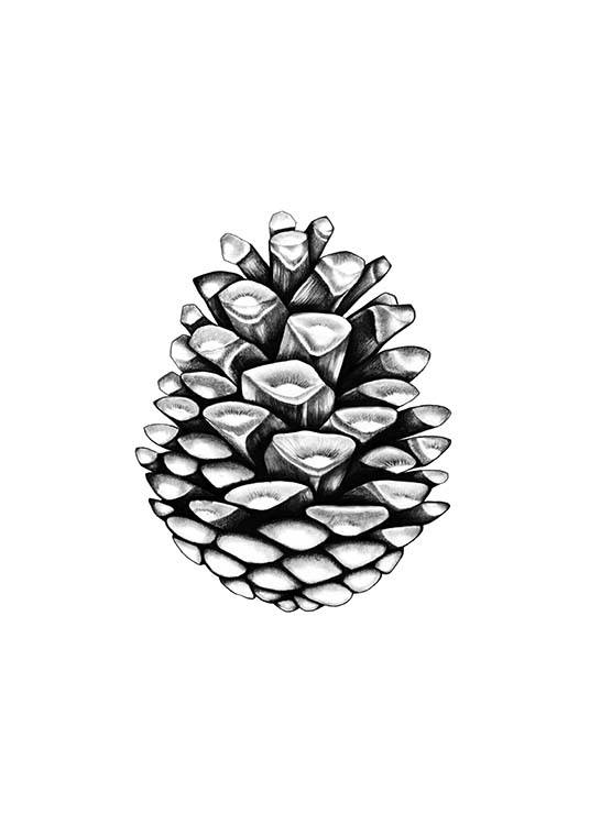 - Stylish plant poster with a pine cone in black and white.