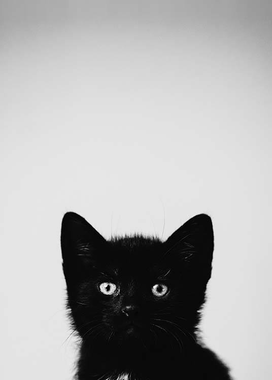 - Cute black and white animal poster with a black kitten for all days except Friday the 13th.