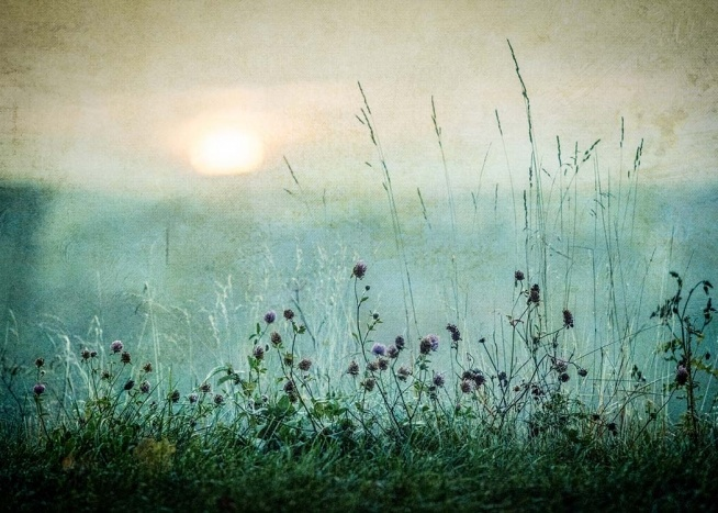 meadow in dawn 70x100