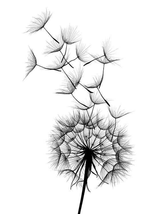 dandelion no2 poster