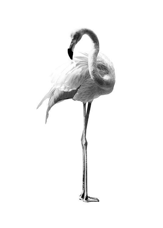 - Modern animal poster with a flamingo in black and white on a white background.