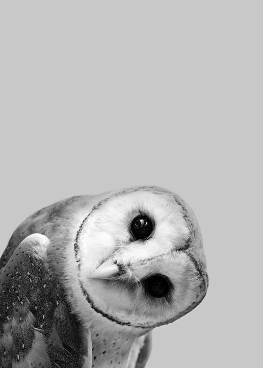 - Black and white animal poster with an owl on a grey background.