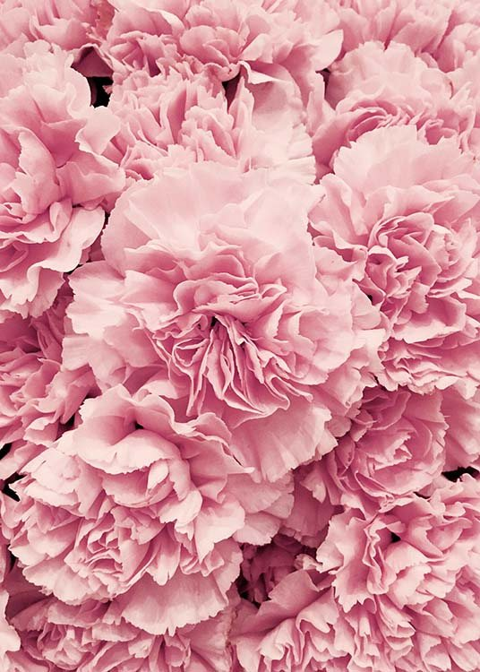 Peonies Poster / Photographs at Desenio AB (2724)