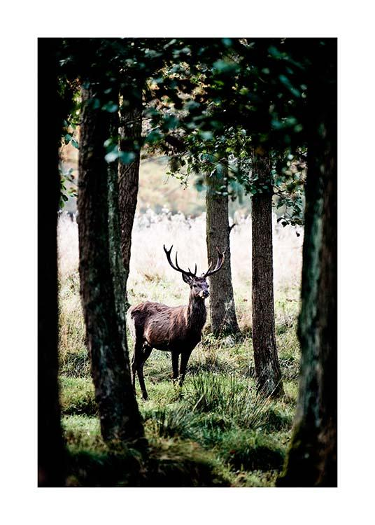 Stag In Forest Poster / Nature prints at Desenio AB (2743)