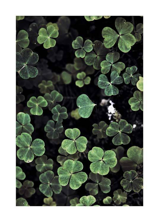 Forest Clover Poster / Photographs at Desenio AB (2829)
