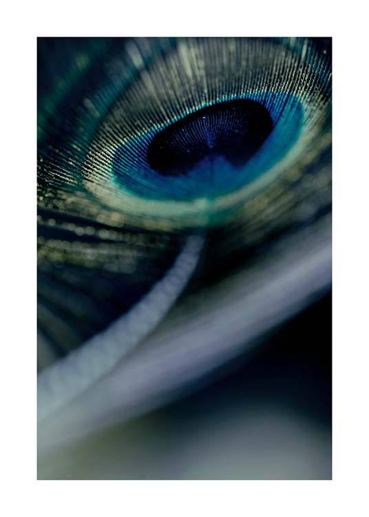 Peacock Feather Close Up Poster / Photographs at Desenio AB (2860)