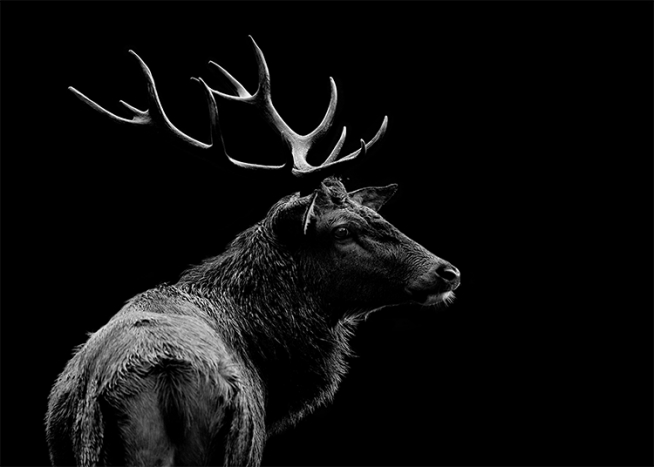 Deer Black Poster / Black & white at Desenio AB (3135)