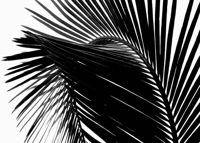 Black Palm Leaf One Poster / Photographs at Desenio AB (3277)