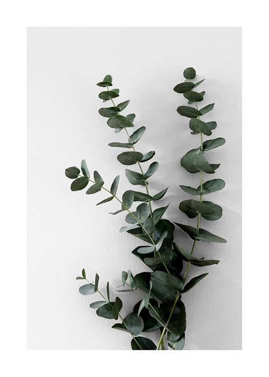 – Photograph of a bunch of eucalyptus branches with green leaves against a grey background