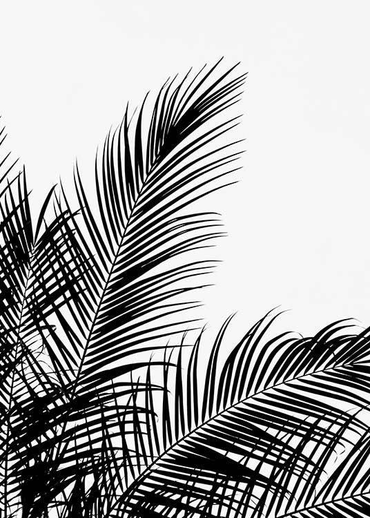 Black Palm Tree Two Poster