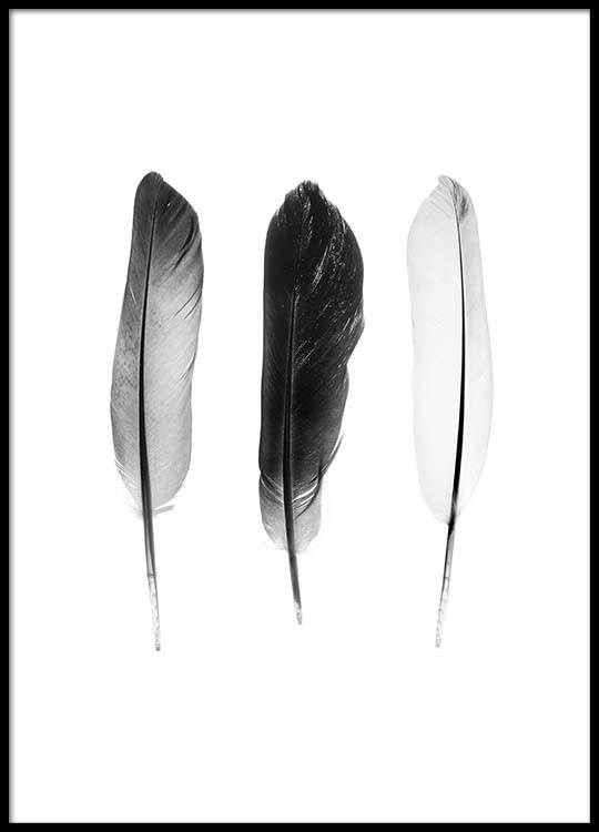 black and white feathers poster