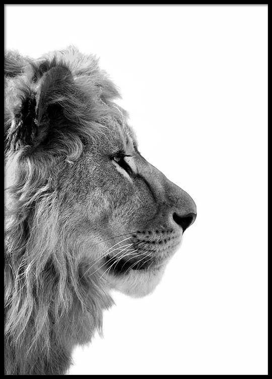 Black And White Lion Posters