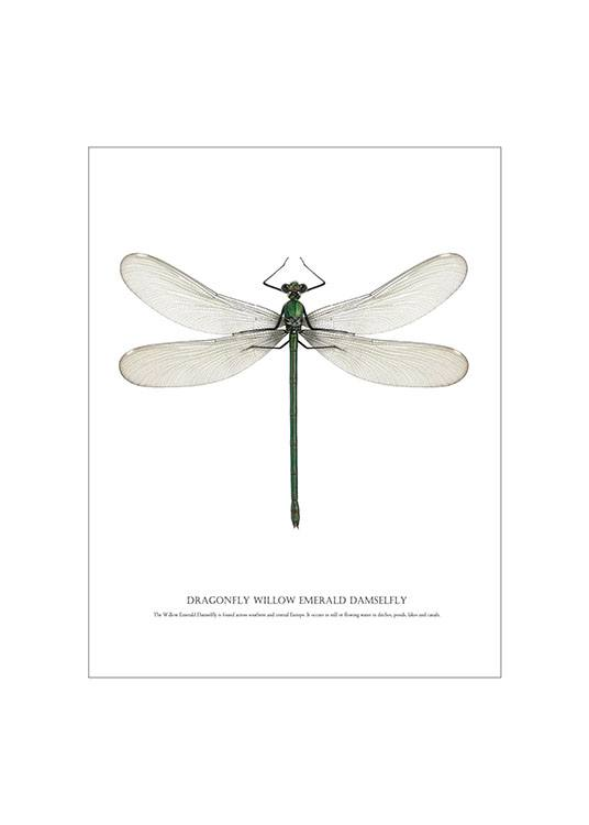 Dragonfly White, Posters / Graphical at Desenio AB (7503)