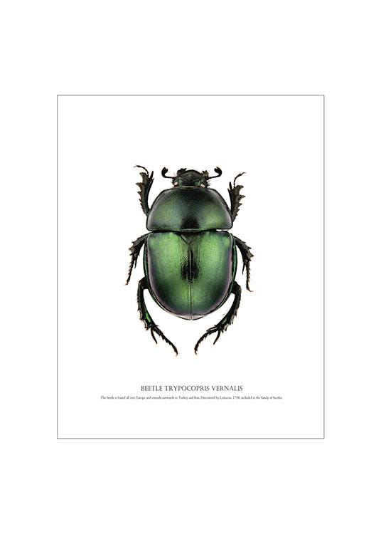 Beetle White, Posters / Animals at Desenio AB (7504)