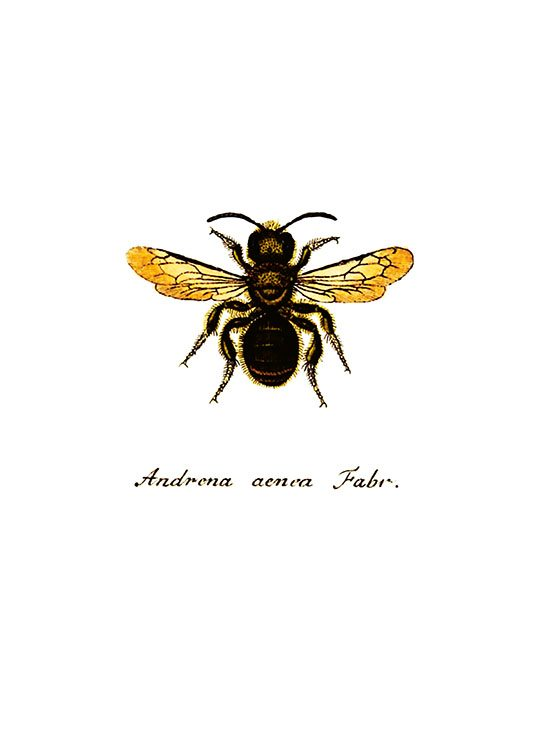 Bee, Prints / Text posters at Desenio AB (7514)