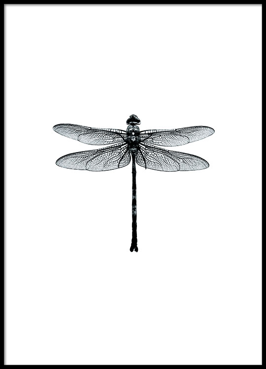 Posters online stylish black and white prints with dragonflies