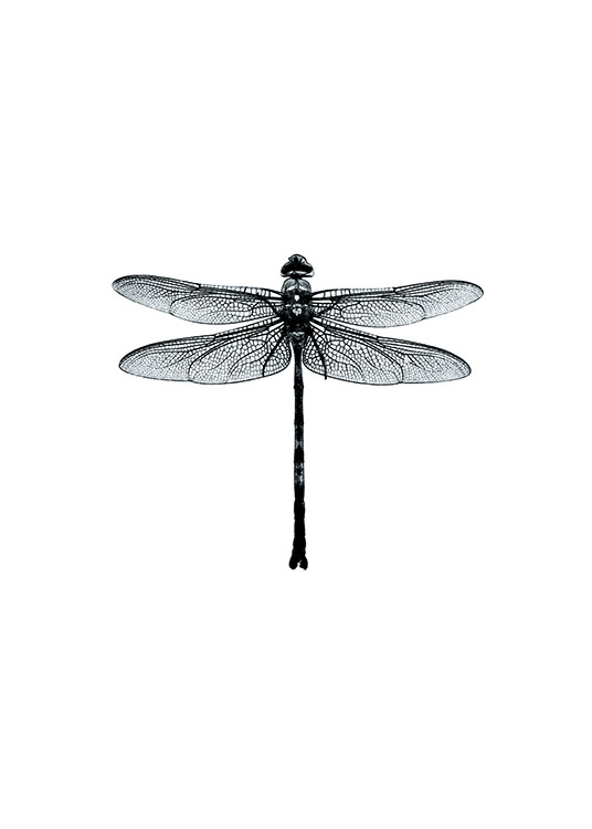 Dragonfly Black And White, Poster / Black & white at Desenio AB (7568)