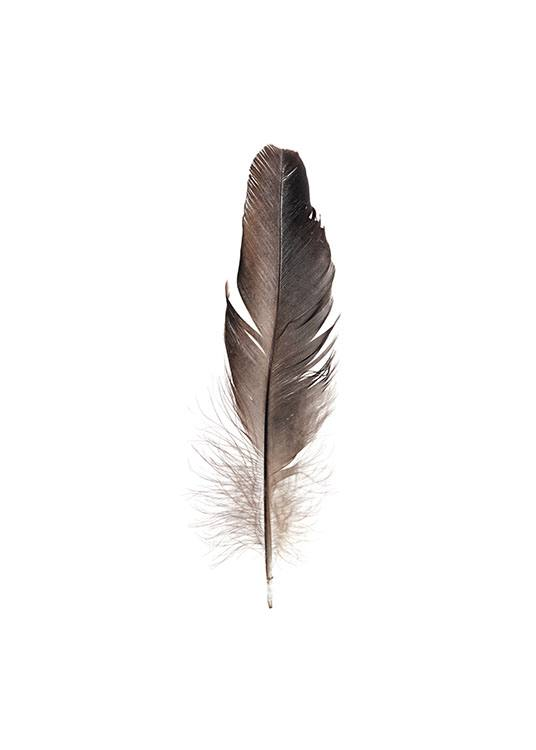 Feather, Poster / Retro & vintage at Desenio AB (7807)