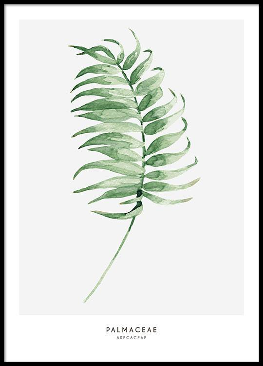 print with green palm frond botany poster prints online