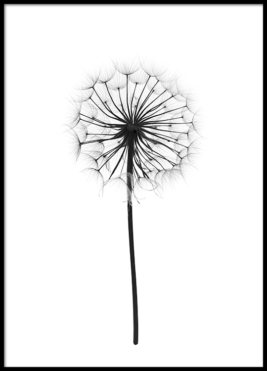 botanical poster print with photograph of a dandelion. Black Bedroom Furniture Sets. Home Design Ideas