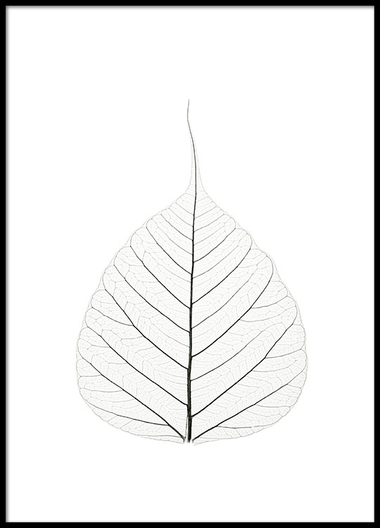 Botanical Black And White Poster With Photo Art Print Online