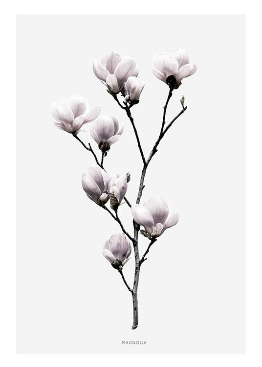 Cleanly Designed Poster With Magnolia Print With Photo Art