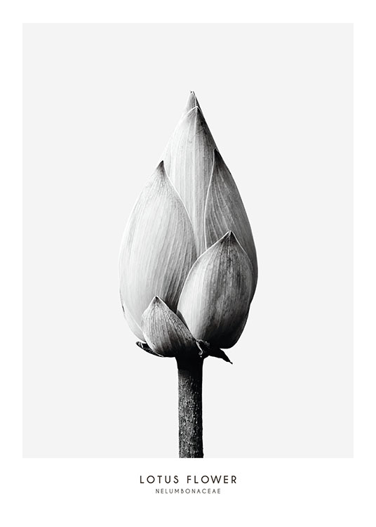 Botanical Black And White Print With Photo Of A Flower