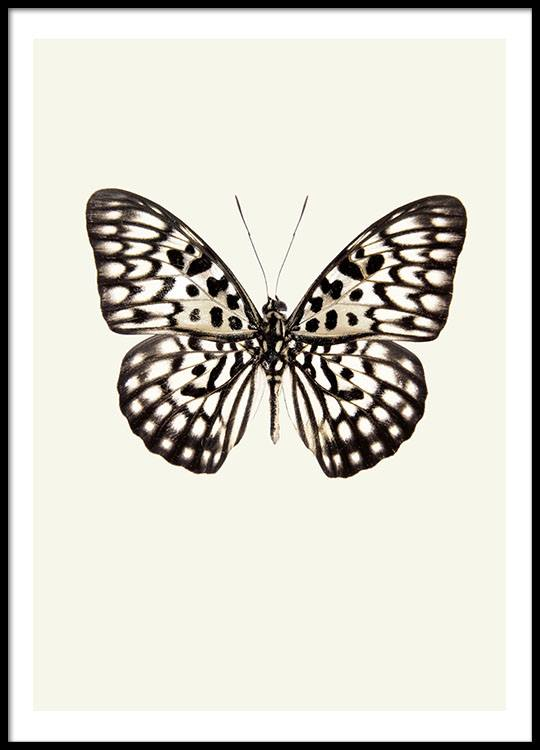 Trendy Poster Designs: Posters With Vintage Butterfly, Trendy Prints Online