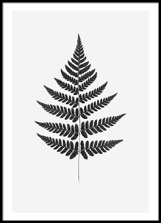 Prints of a fern and photo art online