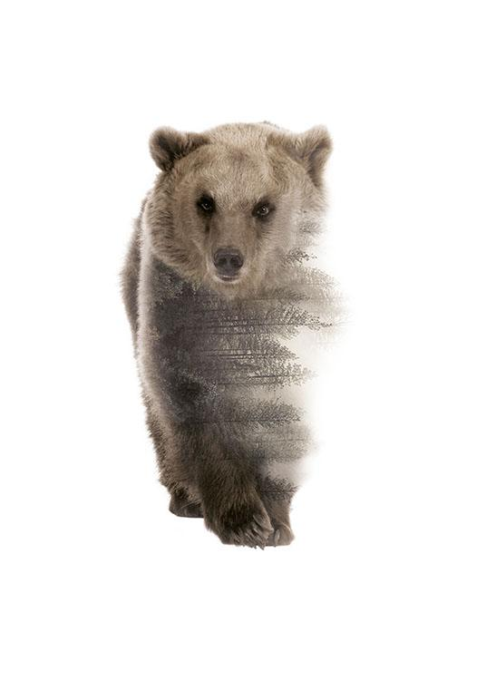 Forest Bear, Poster / Nature prints at Desenio AB (8157)