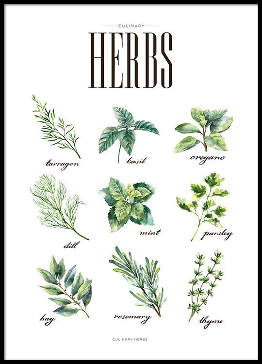 Herbs Green, Poster