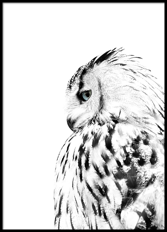 photo poster with a white owl scandinavian prints desenio. Black Bedroom Furniture Sets. Home Design Ideas