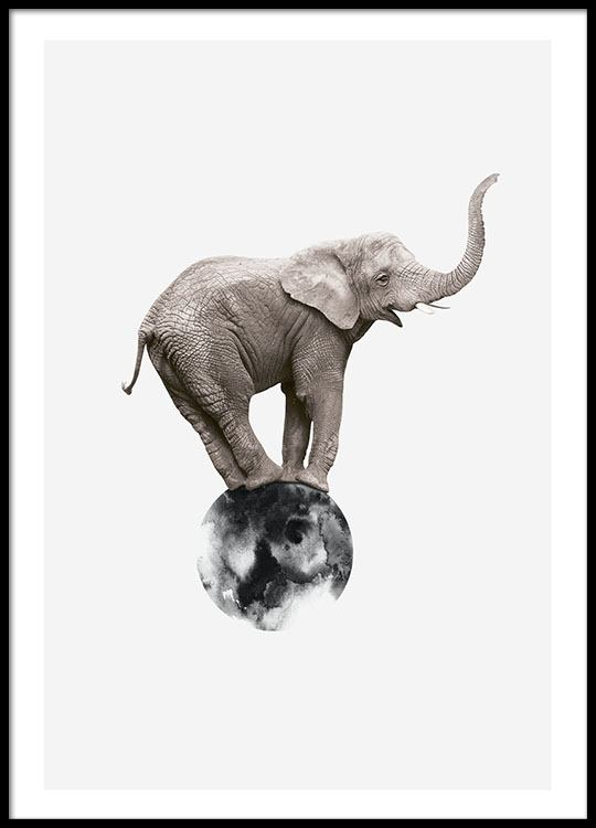 poster with photo art print a photo of an elephant. Black Bedroom Furniture Sets. Home Design Ideas