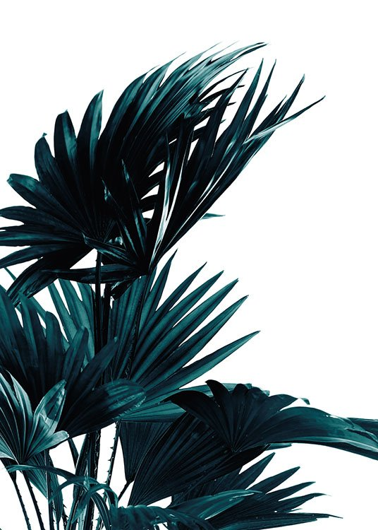 Palm Leaves, Poster / Botanical at Desenio AB (8318)