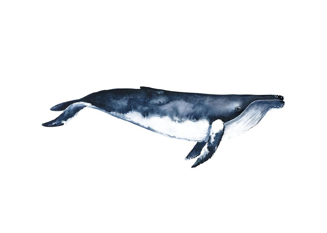 Humpback Whale, Poster / Illustrations at Desenio AB (8416)