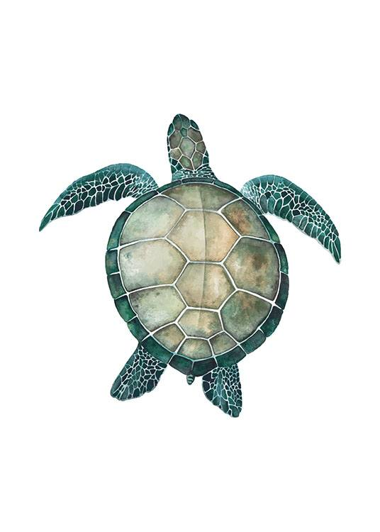 Sea Turtle, Poster / Photographs at Desenio AB (8424)