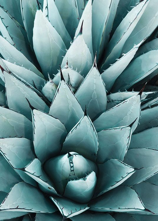 Agave, Poster / Graphical at Desenio AB (8479)