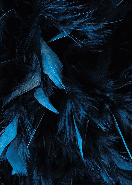 Blue Feathers, Poster / Photographs at Desenio AB (8483)