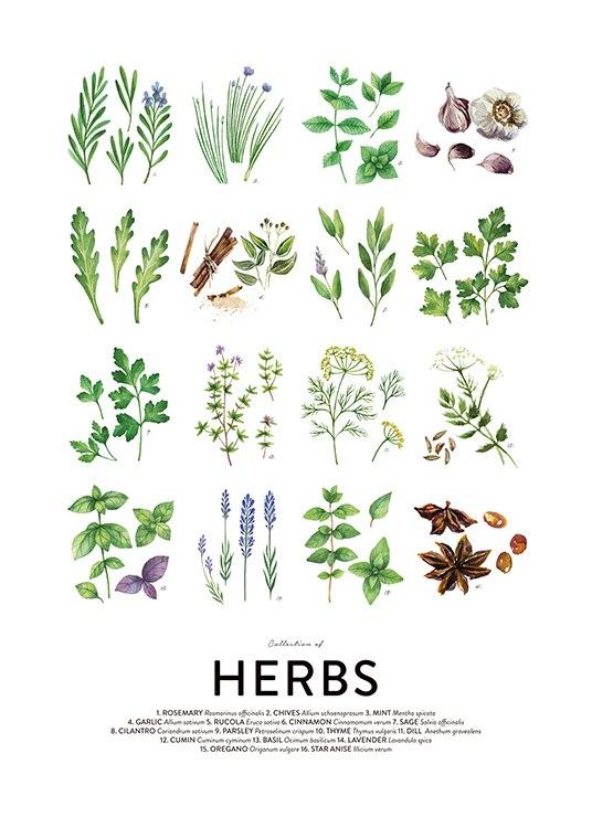 Culinary Herbs, Post