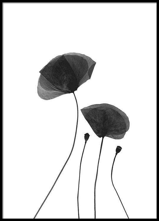 63f8796a7 Black Poppy Flowers, Poster in the group Prints / Floral at Desenio AB (8630