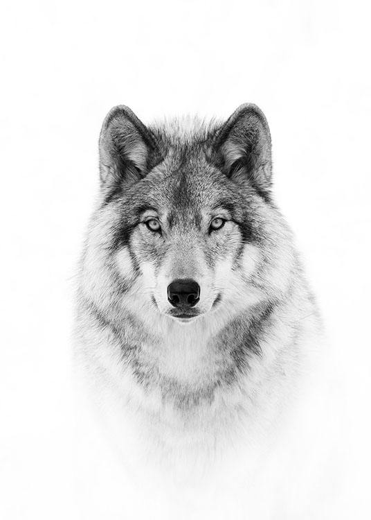 Wolf Poster / Black & white at Desenio AB (8693)