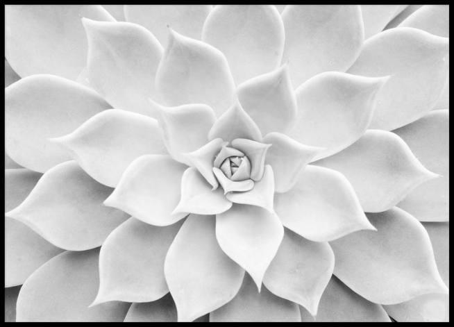 Black N White Art Design