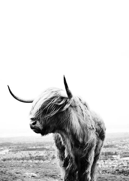 be3476b1d0f Black-and-white photo art of highland cattle
