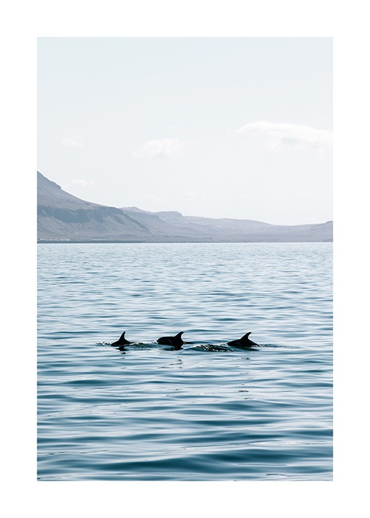 - Photograph of three dolphins swimming in open water with mountains in the background